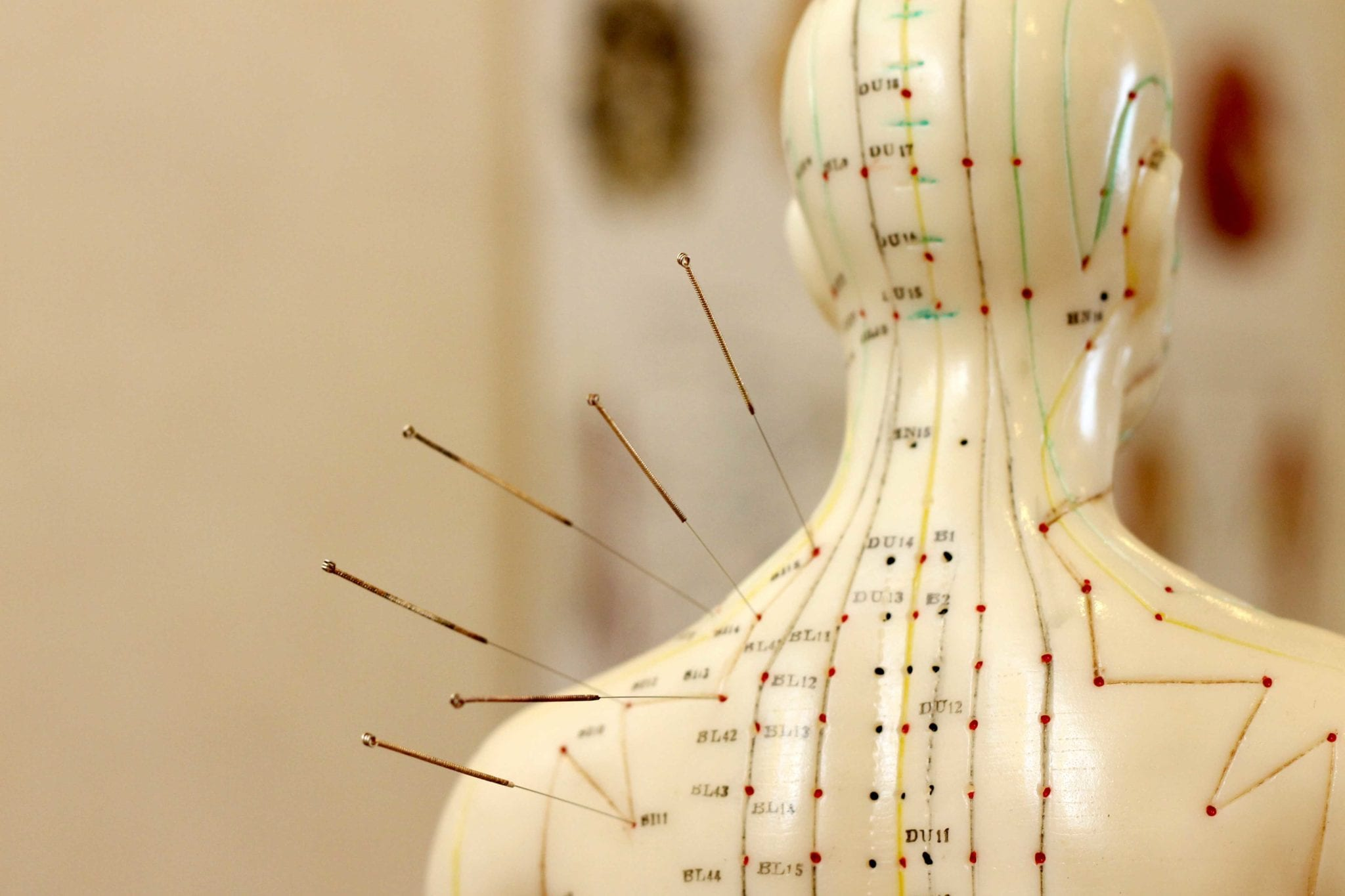Traditional Chinese Medicine Guide