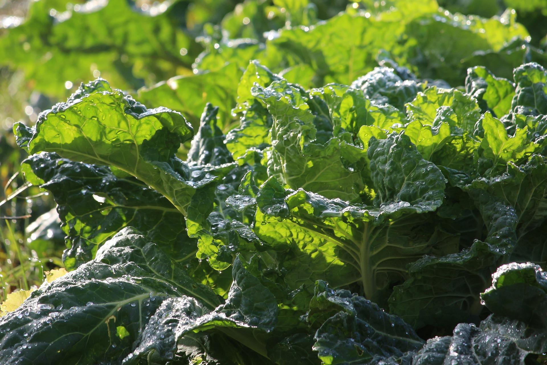 Dark Leafy Green Vegetables