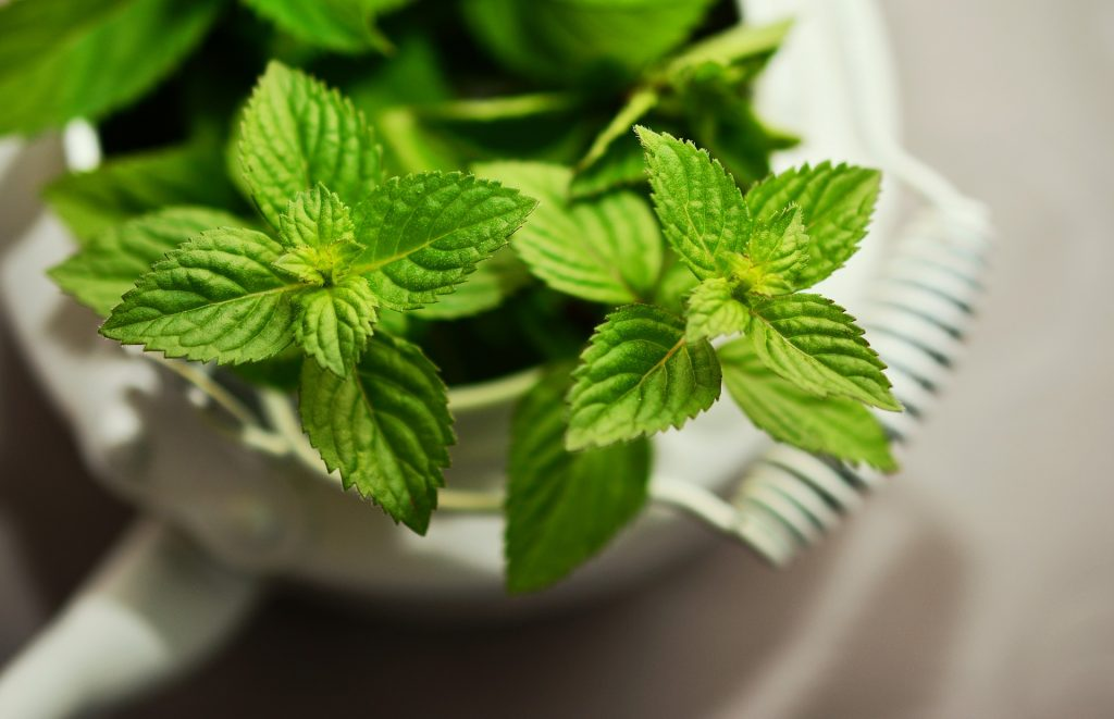 What is Mint good for? 5 Health Benefits you Should know