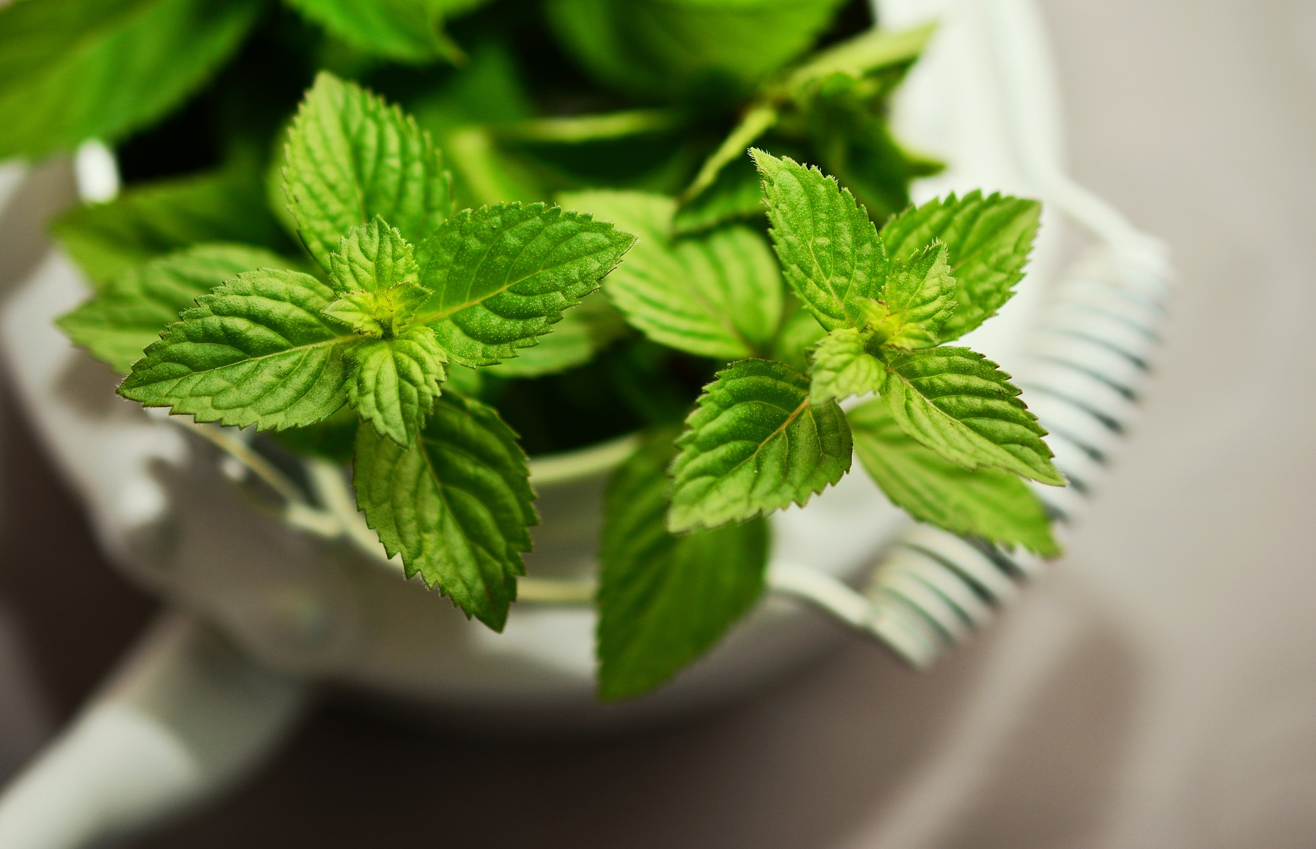 What is Mint good for?
